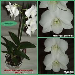 cattleya labiata(0.0), plant(0.0), laelia(0.0), cattleya trianae(0.0), flower(1.0), flora(1.0), moth orchid(1.0), petal(1.0),
