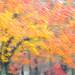 Fall Colors by Bahman Farzad