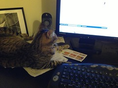 helping me internet