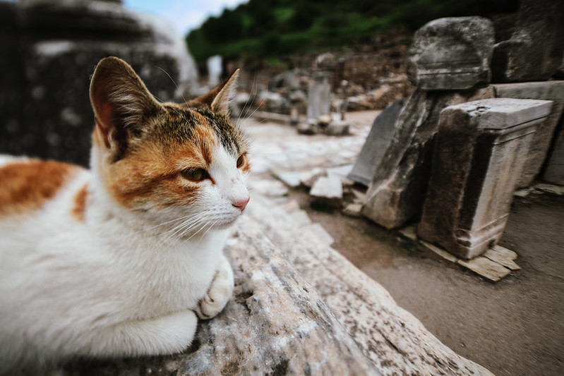 Life in Efes.
