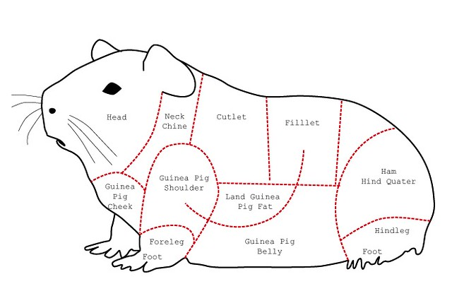 guinea pig side diagram the incredible shrinking man | micro-livestock: guinea pig guinea pig diagram label