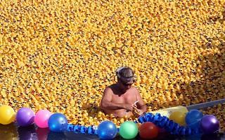 potd-ducks_2561251k