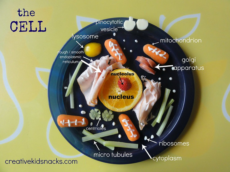Make a cell out of healthy foods from the fridge - great for a science lesson for home schoolers, science classroooms, or simple reinforcement at home when your student learns about cells.