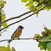 A lone grosbeak by photosuze (photos loading too slowly, so sorry if
