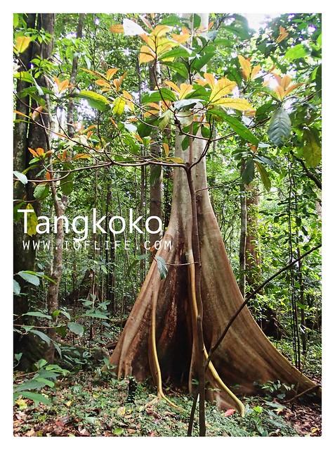 hutan tangkoko