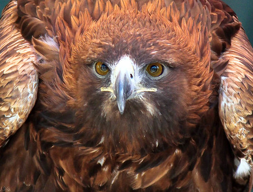 La mirada del Aguila  --  The look of the eagle