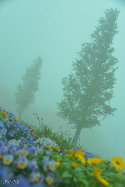 霧の中へ 2