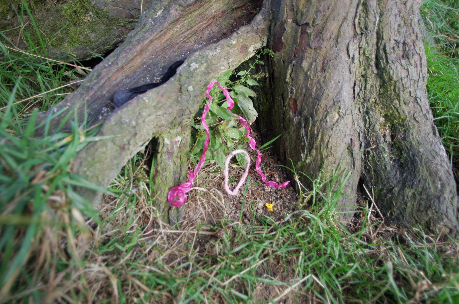L'arbre à fée de Tara - Carnet de voyage en Irlande