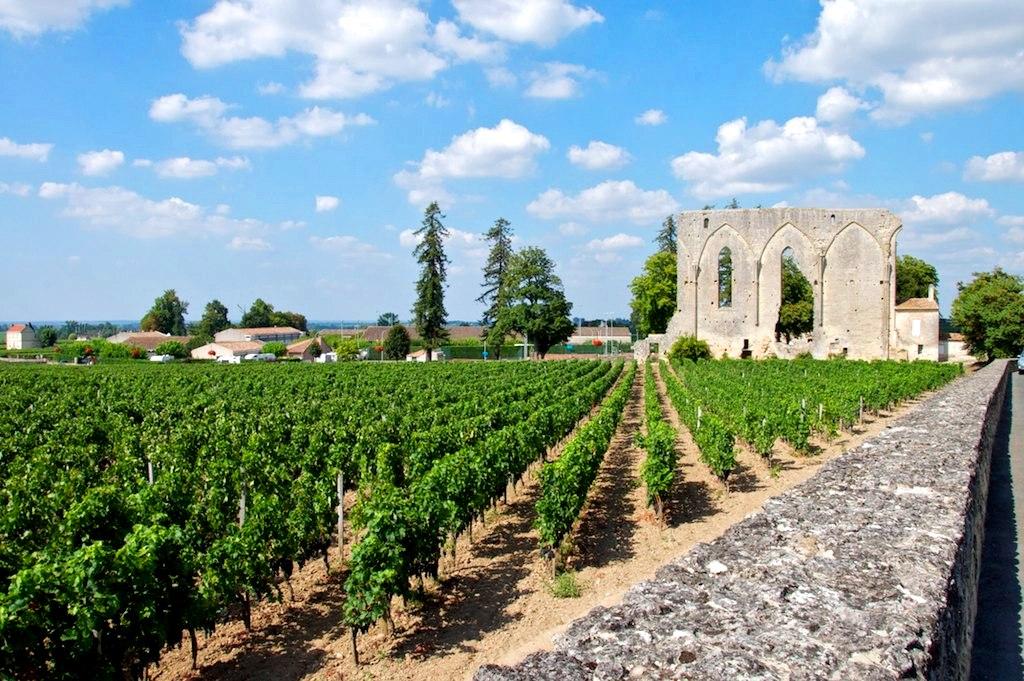 Viñedos cerca de Burdeos, cuna del vino más caro del mundo. Autor, Riolnet