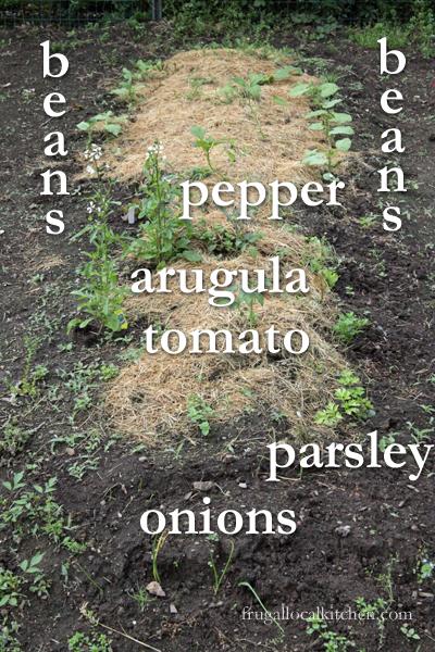 kids-garden-planted-2