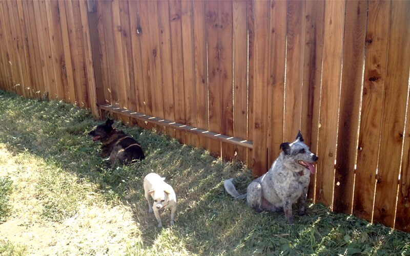 fence-dogs2