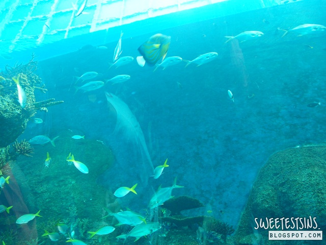 sea aquarium marine life park resort world sentosa singapore (12)