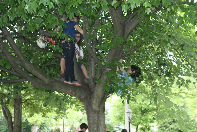 Kid Climbing Tree Kids Climbing Trees