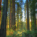 Headwaters Forest Reserve by mypubliclands