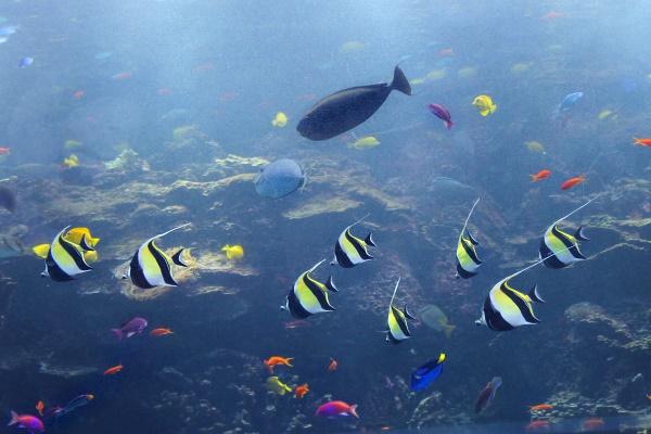 Georgia Aquarium, 12