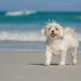 Dog on beach by john white photos