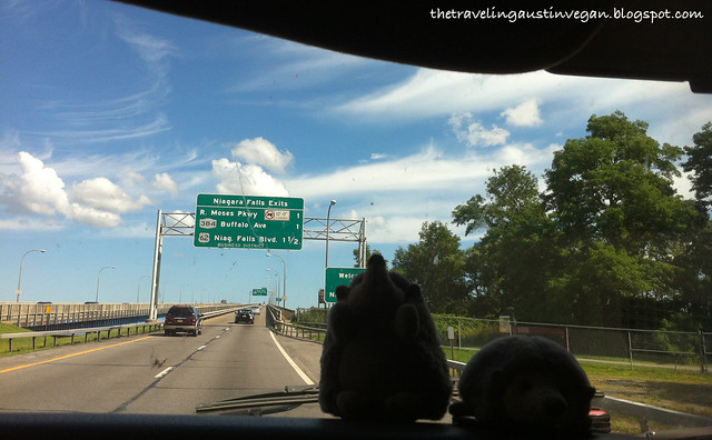 Hedgehogs On The Way To Niagra Falls, Canada