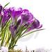flores-hermosas-del-resorte-del-arte-23605207