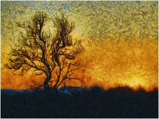 Real Sunset & Tree Silhouette with Painterly Program