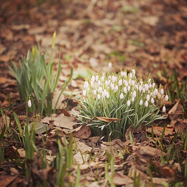 Теперь тут будет много цветочного спама) 🌷 Мы сегодня сходили в #АптекарскийОгород Нашли все подснежники, крокусы, обошли все оранжереи) #hortus_ru #flower #spring