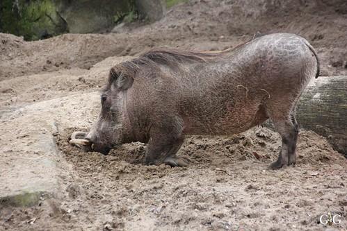 Sonntags Besuch im Zoo Berlin 25.01.2015 61
