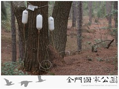 松材線蟲生物防治-01