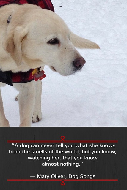 """A dog can never tell you what she knows-3"
