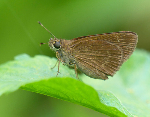 usa macro nature america butterfly insect us florida wildlife butterflies lepidoptera usspecies