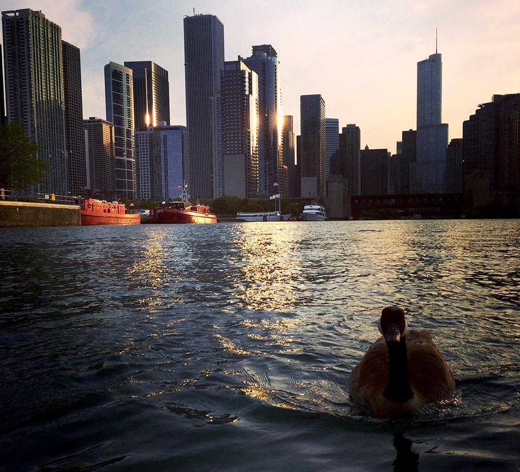 Chicago - June 2014