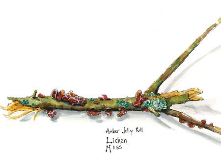 20150208_amber_jelly_lichen_moss_web