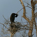 Cormorant Itch