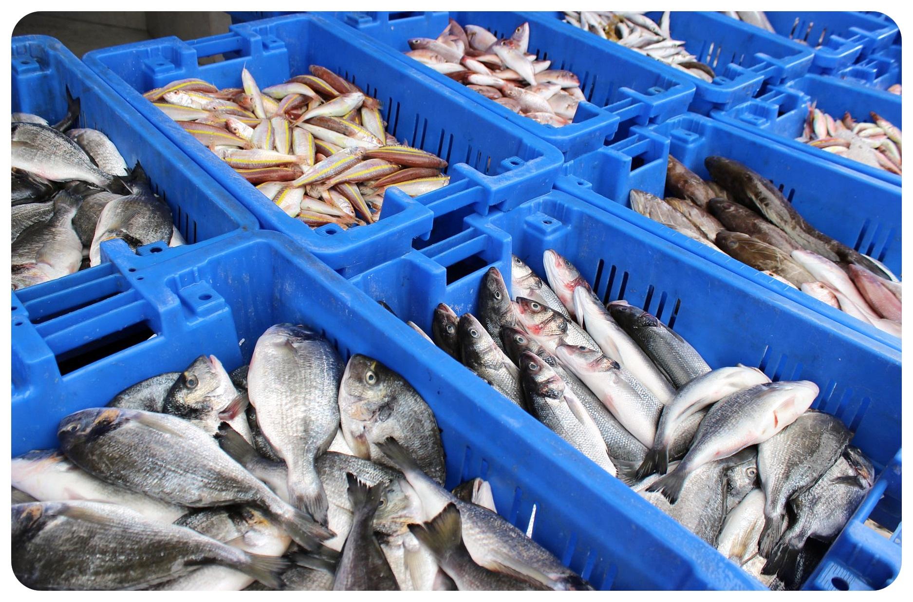 akko fish