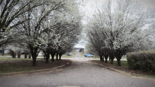Guthrie Pear Trees - Impressions Photo Painting I 80 pct