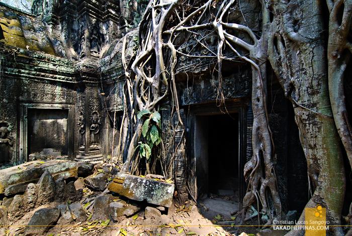 Ta Prohm Temple in Siem Reap