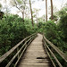 Audubon Corkscrew Swamp Sanctuary [06.08.16] by Andrew H Wagner | AHWagner Photo