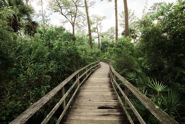 Audubon Corkscrew Swamp Sanctuary [06.08.16]
