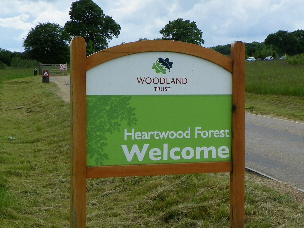 Image result for heartwood forest
