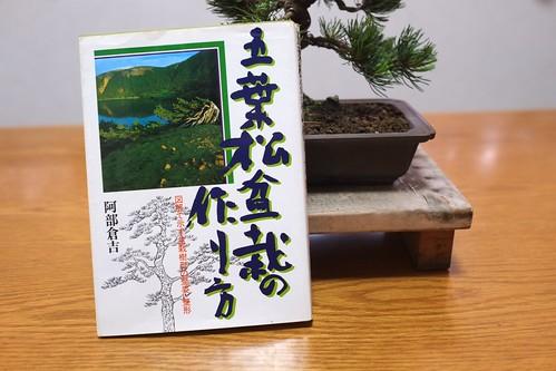 五葉松盆栽の作り方