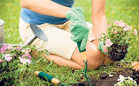 gardenerselbow_2514696c