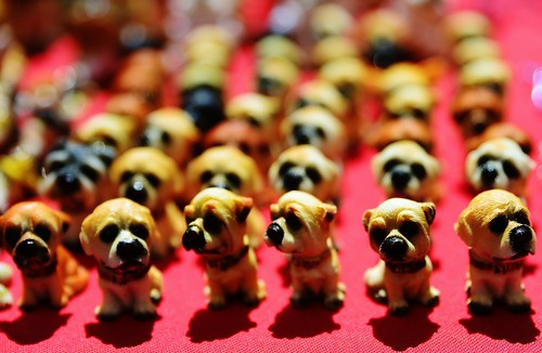 The PUPPY ARMY!  D800 TAMRON 24 70 2.8 VC