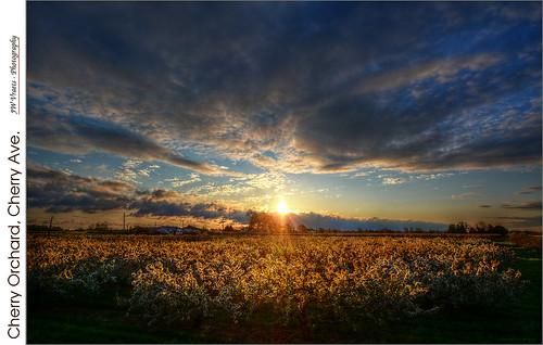 cherry dawn nikon blossoms gimp hdr luminance grimsby vineland westlincoln nikkor1224mm qtpfsgui d7100