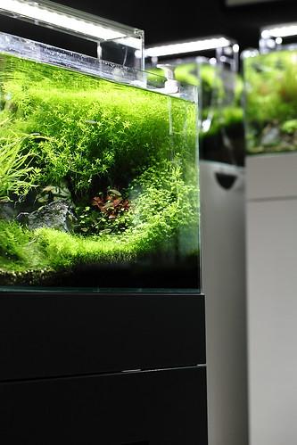 Green Aqua Showroom