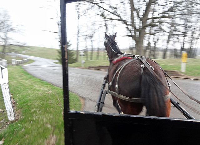 amish-buggy-ride-horse