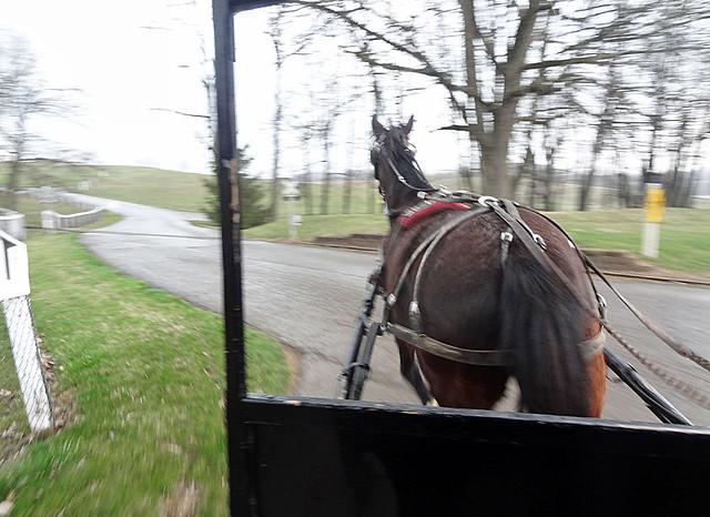 amish-buggy-ride-horse