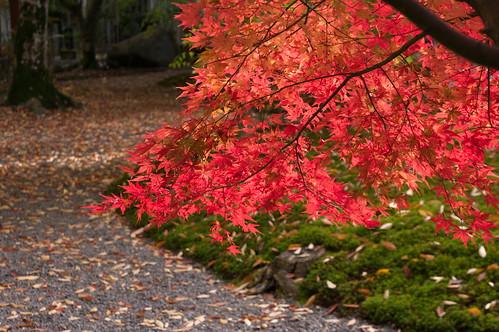 【写真】2012 紅葉 : 長岡天満宮/2020-10-09/IMGP6573