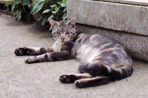 川越貓咪3