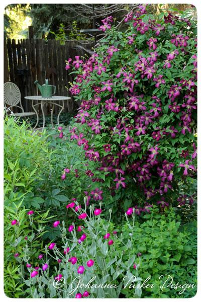 Summer-Garden-Clematis