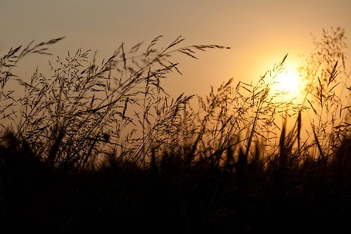 Brushfire (Backlit Reedbed At Sunset), Dalaman by flatworldsedge