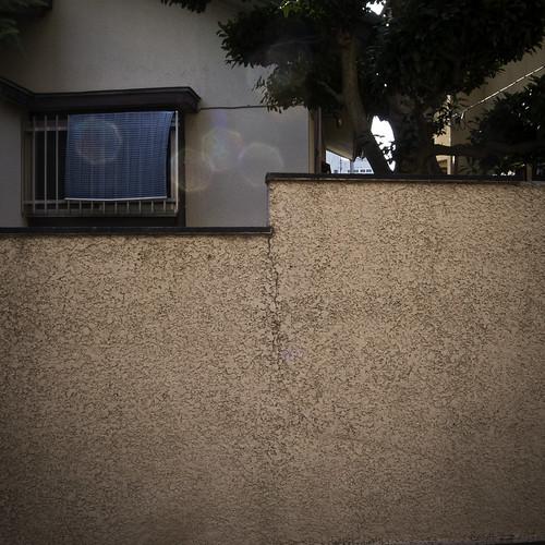 Step Up Window Wall with Tree