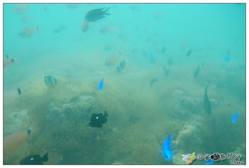2013歐船長東海休閒漁業_93